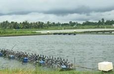 Ngành nông nghiệp Sóc Trăng kỳ vọng vào vụ tôm nước lợ năm 2021