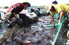 Kiểm soát ngăn chặn hành vi kinh doanh và nhập khẩu cá tầm