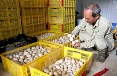Nguồn cung dồi ào, sức mua giảm làm giá trứng gia cầm liên tục rớt giá