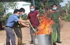 Thu giữ và tiêu hủy 14kg củ và lá giả sâm Ngọc Linh Kon Tum