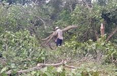 Bình Phước: Mưa lớn, dông lốc làm hơn 30 căn nhà bị sập, tốc mái