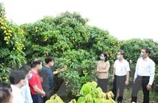 Nhiều doanh nghiệp cam kết tiêu thụ vải sớm cho Bắc Giang