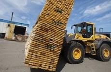 Mâu thuẫn giữa Canada và Mỹ về mức thuế đối với mặt hàng gỗ mềm