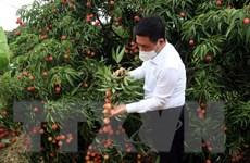 Dịch COVID-19: Bắc cầu đưa nông sản Việt Nam sang Nhật Bản