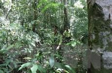 Ninh Bình tăng cường phòng, chống cháy rừng khi nắng nóng gay gắt