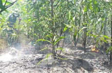 Quảng Bình: Gần 500 người tham gia dập lửa chữa cháy rừng ven biển