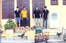 Quảng Bình: Bắt nhóm thanh niên trộm cắp tài sản gây nhức nhối xã hội