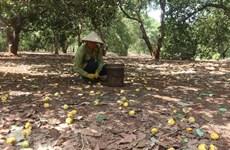 Bà Rịa-Vũng Tàu ký kết chương trình hỗ trợ tiêu thụ nông sản