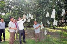 Sơn La: Gia tăng giá trị cho sản phẩm xoài của huyện Yên Châu