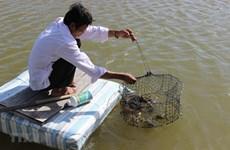 Cà Mau chú trọng công tác bảo vệ môi trường trong nuôi trồng thủy sản