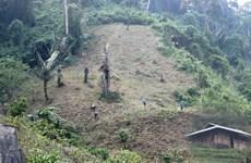 Hai trường hợp vi phạm luật bảo vệ rừng bị phạt hơn 400 triệu đồng