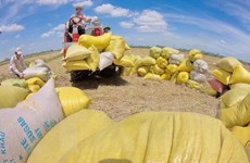 Giải quyết điểm nghẽn cho nông sản vào vụ: Khơi thông chuỗi hàng hóa