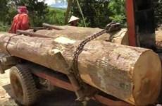 Đắk Lắk: Nhiều đối tượng khai thác gỗ trái phép tấn công bảo vệ rừng