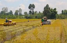 Tỉnh Cà Mau tìm giải pháp hỗ trợ tiêu thụ nông sản cho nông dân