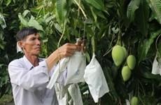 Đồng Tháp xây dựng, phát triển thương hiệu nông sản chủ lực