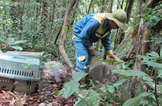Bình Phước: Thả nhiều cá thể động vật quý hiếm về rừng tự nhiên