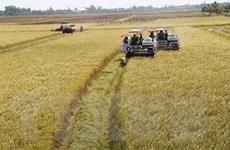 Thị trường nông sản tuần qua: Giá lúa gạo ở ĐBSCL tăng nhẹ