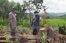 Chủ tịch UBND tỉnh Phú Yên chỉ đạo điều tra các vụ phá rừng