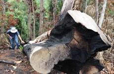Phú Yên: Khởi tố các vụ phá rừng phòng hộ đầu nguồn ở huyện Sơn Hòa