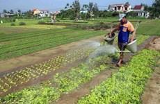 Hà Nội: Rau xanh tăng giá mạnh do thời tiết nắng nóng kéo dài