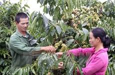 """Việt Nam ủng hộ sáng kiến về """"Thập kỷ nông nghiệp hộ gia đình"""""""