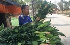 Hà Nội: Hoa ly rục rịch tăng giá trở lại trước ngày Quốc tế Phụ nữ 8/3