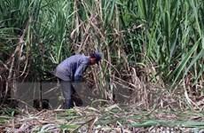 Thủ tướng yêu cầu xử lý phản ánh của VietnamPlus về quy hoạch nông sản