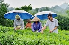 Thoát nghèo bền vững nhờ sử dụng nguồn vốn tín dụng hiệu quả