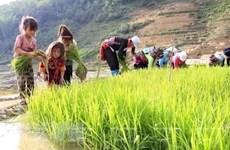 Việt Nam đẩy mạnh ứng phó với nguy cơ lao động trẻ em vì COVID-19