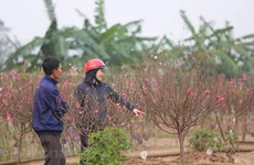 Bộ Lao động đề xuất hai phương án nghỉ Tết Tân Sửu 2021 kéo dài 7 ngày