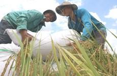 Lần đầu tiên Việt Nam vào nhóm nước có chỉ số phát triển con người cao