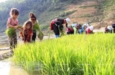 Tỷ lệ lao động trẻ em của Việt Nam thấp hơn 2% mức trung bình khu vực