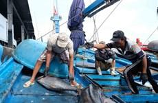 Hỗ trợ lao động đánh bắt và chế biến thủy sản Đông Nam Á di cư an toàn