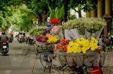 [Photo] Những gánh hàng rong chở cả mùa thu Hà Nội
