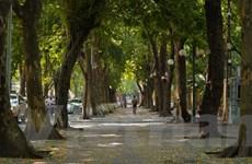 [Photo] Ngắm lá vàng rơi trên con phố lãng mạn bậc nhất Hà thành