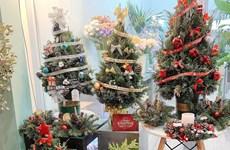 Trang trí mùa Giáng sinh 2020: Cây thông nhập khẩu hút khách