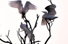 Đảo Cò Chi Lăng Nam chính thức trở thành di tích cấp quốc gia