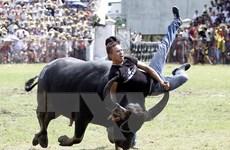 Xem xét đưa lễ hội chọi trâu Đồ Sơn khỏi danh mục di sản cấp quốc gia