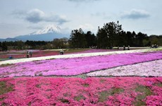 Khám phá vẻ đẹp thiên nhiên và công trình nhân tạo hàng đầu Nhật Bản
