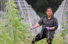 Những thước phim đặc biệt về thân phận cô dâu Việt nơi xứ Đài