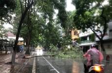 Cây cối bị quật đổ tại Hà Nội do ảnh hưởng của bão số 3