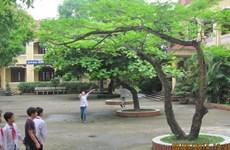 Vụ sa thải giáo viên ở Bắc Ninh: Cú sốc với các nhà trường
