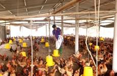 Bộ Nông nghiệp: Tiếp tục kiểm soát chặt chẽ dịch cúm gia cầm