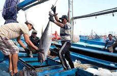 Khuyến khích ngư dân bám biển sau lệnh ngừng đánh bắt của Trung Quốc