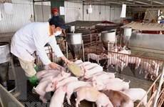 Bộ Nông nghiệp và Phát triển nông thôn: Cho phép nhập khẩu lợn sống