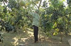 Việt Nam phấn đấu sản xuất nông nghiệp hữu cơ như các nước tiên tiến