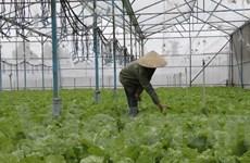 Trồng rau và nuôi gia cầm để phục hồi sản xuất sau lũ tại miền Trung