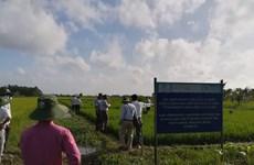 Luân canh cây trồng cải thiện chất lượng đất ở đồng bằng sông Cửu Long