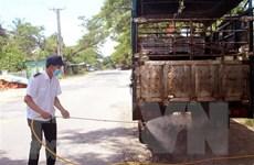 Tăng cường kiểm soát ngăn chặn tình trạng buôn bán thịt lợn trái phép