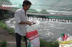 [Video] Kiếm tiền tỷ mỗi năm nhờ mô hình nuôi tôm sạch tại Đồng Nai